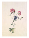 Carnation and Gentian