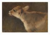 A Calf  1879