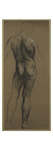 Male Nude Study (Black and White Chalk on Brown Paper)