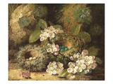 Primroses and Bird's Nests on a Mossy Bank  1882