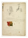 Beautiful Groups of Pines; Tints from Maples  New Hampshire  September 30th 1828