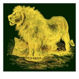 The Lion  Illustration from J G Wood's 'Illustrated Natural History'  Published C1850