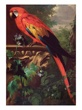 Scarlet Macaw in a Landscape (Oil on Canvas)