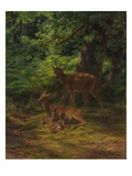 Deer in Repose  1867 (Oil on Canvas)