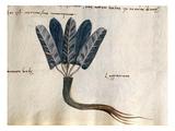 Cod CCXXXVII Lapparium  Medicinal Plants from a 'Herbarium Apuleii Platonicii'