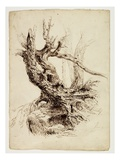 Gnarled Tree Trunk  C1826 (Pen and Brown Ink over Graphite Pencil on Cream Wove Paper)