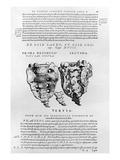 Vertebrae  Cocyx (B/W Print)