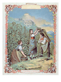 Harvesting Grapes  from a Calendar  C1880 (Colour Litho)