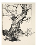 The Duke's Oak  Illustration from 'Midsummer Nights Dream' by William Shakespeare  1908 (Litho)