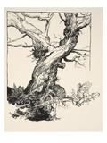 The Duke's Oak  Illustration from 'Midsummer Nights Dream' by William Shakespeare  1908 (Litho)