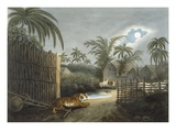 A Tiger Prowling Through a Village (Cattle in Terror)  from 'Oriental Field Sports'