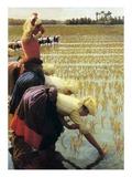 An Italian Rice Field  1901