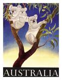 Australia Koala c1956