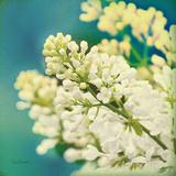 Natures Lilac Blossom