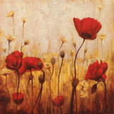 Poppies and Daisies II