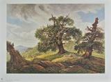 Oak Trees on the Seashore