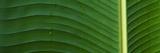 Water Drops on a Palm Leaf  Hawaii  USA