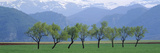 Trees in a Field with Mountain Range in the Background  Pyrenees  Spain