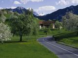 Switzerland  Luzern  Trees  Road