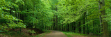 Road Through a Forest Near Kassel Germany