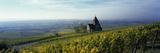 Vineyards with a Church in the Background  Gau-Bickelheim  Rheinhessen  Rhineland-Palatinate  Ge