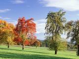 Switzerland  Pear Orchard   Autumn