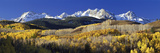 USA  Colorado  Rocky Mountains  Aspens  Autumn