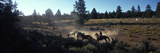 Cowboys on Horses in a Ranch  Bend  Deschutes County  Oregon  USA