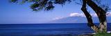 Tree at a Coast  Kapalua  Molokai  Maui  Hawaii  USA