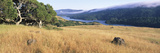 Grass with a Lake in the Background  Crystal Springs Reservoir  San Mateo County  California  USA