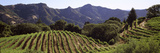 Hilltop Vineyard  Rockpile  Sonoma  California  USA