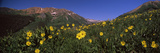 Wildflowers in a Forest  Kebler Pass  Crested Butte  Gunnison County  Colorado  USA