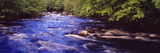 River Flowing in a Forest  Petite River  Nova Scotia  Canada
