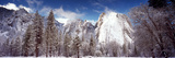 Snowy Trees with Rocks in Winter  Cathedral Rocks  Yosemite National Park  California  USA