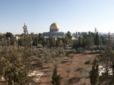 Trees with Mosque in the Background  Dome of the Rock  Temple Mount  Jerusalem  Israel