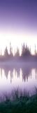 Reflection of Trees in a Lake  Mt Rainier  Mt Rainier National Park  Pierce County  Washington S