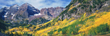 Aspen Trees in Autumn with Mountains in the Background  Maroon Bells  Elk Mountains  Pitkin Coun