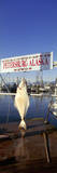 Halibut Hanging at a Harbor  Petersburg Harbor  Mitkof Island  Alaska  USA