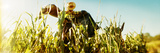 Scarecrow in a Corn Field  Queens County Farm  Queens  New York City  New York State  USA