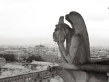 Gargoyle Statues at a Cathedral  Notre Dame  Paris  Ile-De-France  France