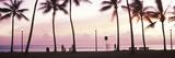 Palm Trees on the Beach  Waikiki  Honolulu  Oahu  Hawaii  USA