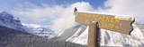 Clark's Nutcracker (Nucifraga Columbiana) Perching on Mountain Sign  Mt Kitchener  Jasper Natio