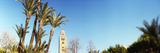 Koutoubia Mosque and Palm Tree in Marrakesh  Morocco