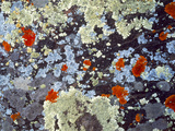 Lichens on Rock CO USA