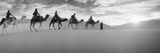Tourists Riding Camels Through the Sahara Desert Landscape Led by a Berber Man  Morocco
