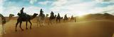 Tourists Riding Camels Through the Sahara Desert Landscape Led by a Berber Man  Morocco