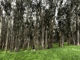 Woman Jogging in a Park  the Presidio  San Francisco  California  USA
