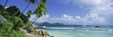 Palm Trees on the Beach  Anse Severe  La Digue Island  Praslin Island  Seychelles
