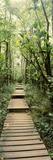 Bamboo Forest  Oheo Gulch  Seven Sacred Pools  Hana  Maui  Hawaii  USA