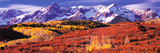 Forest in Autumn with Snow Covered Mountains in the Background  Telluride  San Miguel County  Co